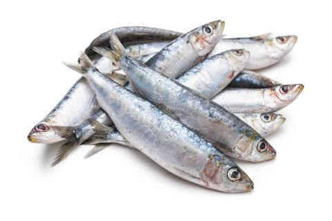 Sardines as a B12 Source