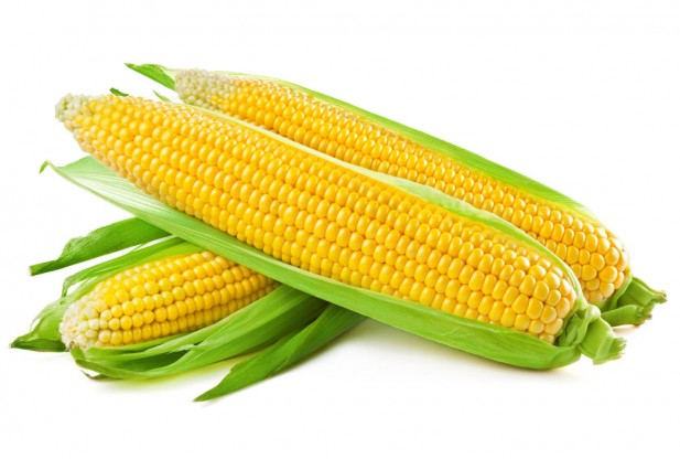 Corn as a gluten free food